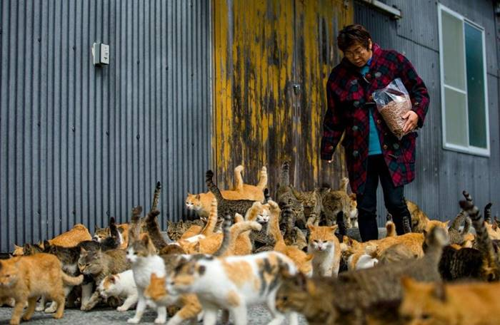 There are a lot of cats on the island of Aoshima in southern Japan