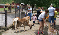 Exotic animals near Gatlinburg