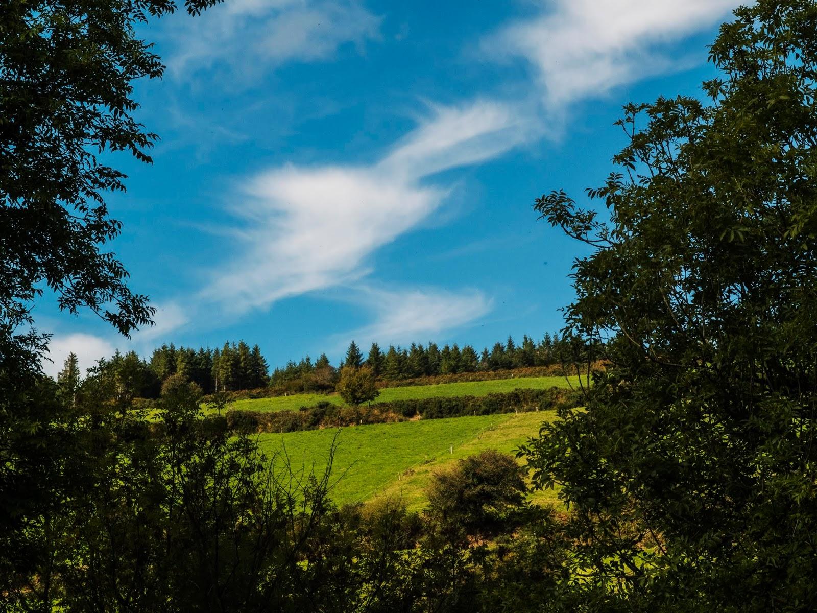 Sunny hillside hidden between two trees in North Cork.