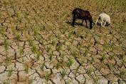 BMKG: 69% Wilayah Alami Musim Kemarau, 4 Kabupaten Berstatus AWAS Kekeringan Meteorologis