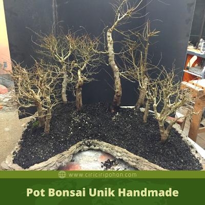 Pot Bonsai Unik Handmade