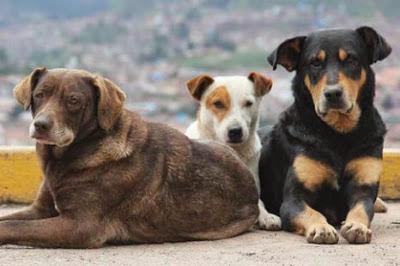 Βάλτε φρένο στον σκύλο που μπλέκει σε καυγάδες