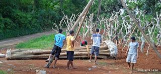 Pohon kecrutan