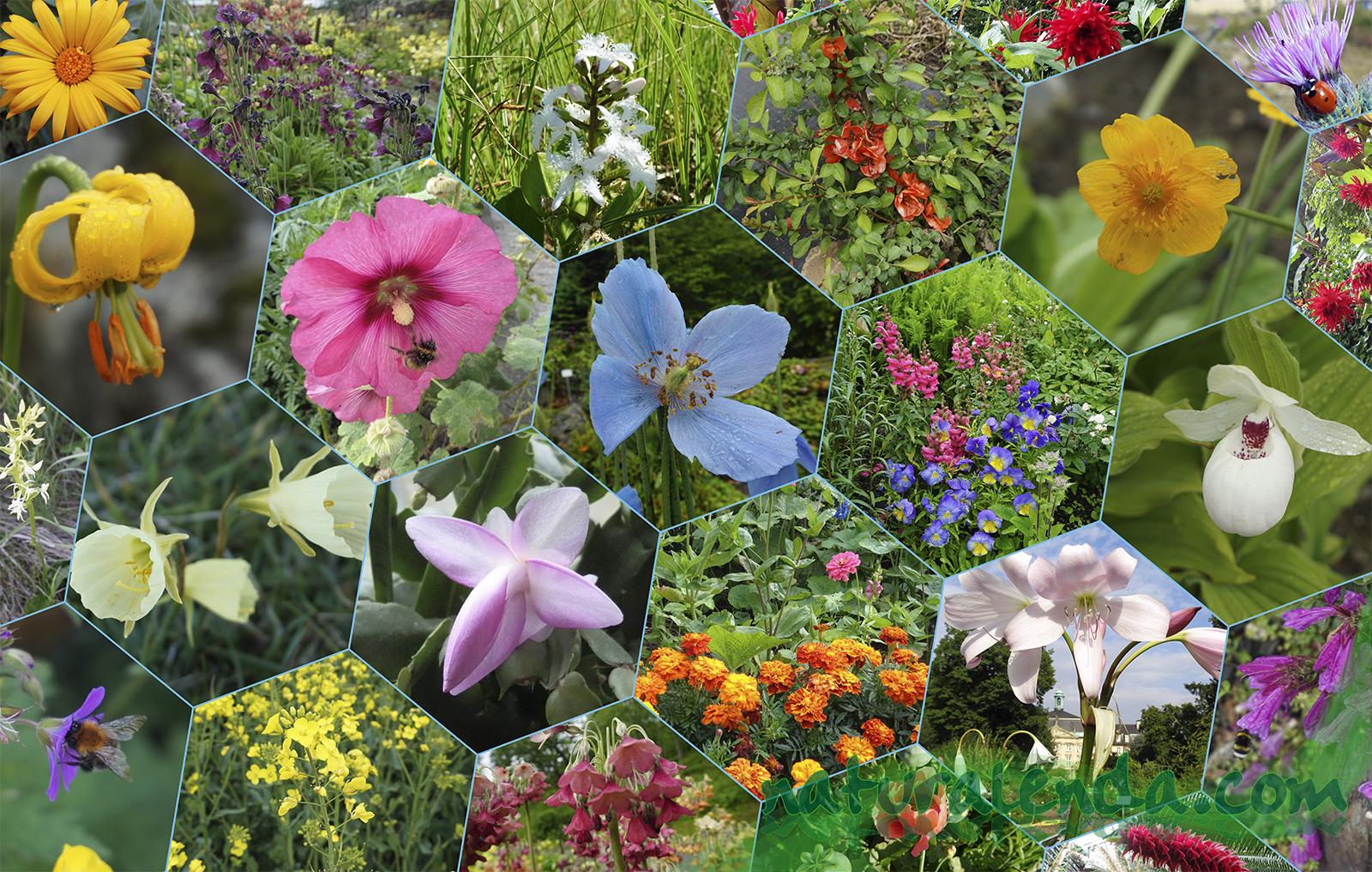 Nombres inspirados en flores