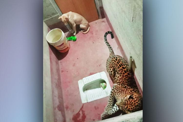Dog miraculously survived after getting stuck in a bathroom with a leopard for 7 hours