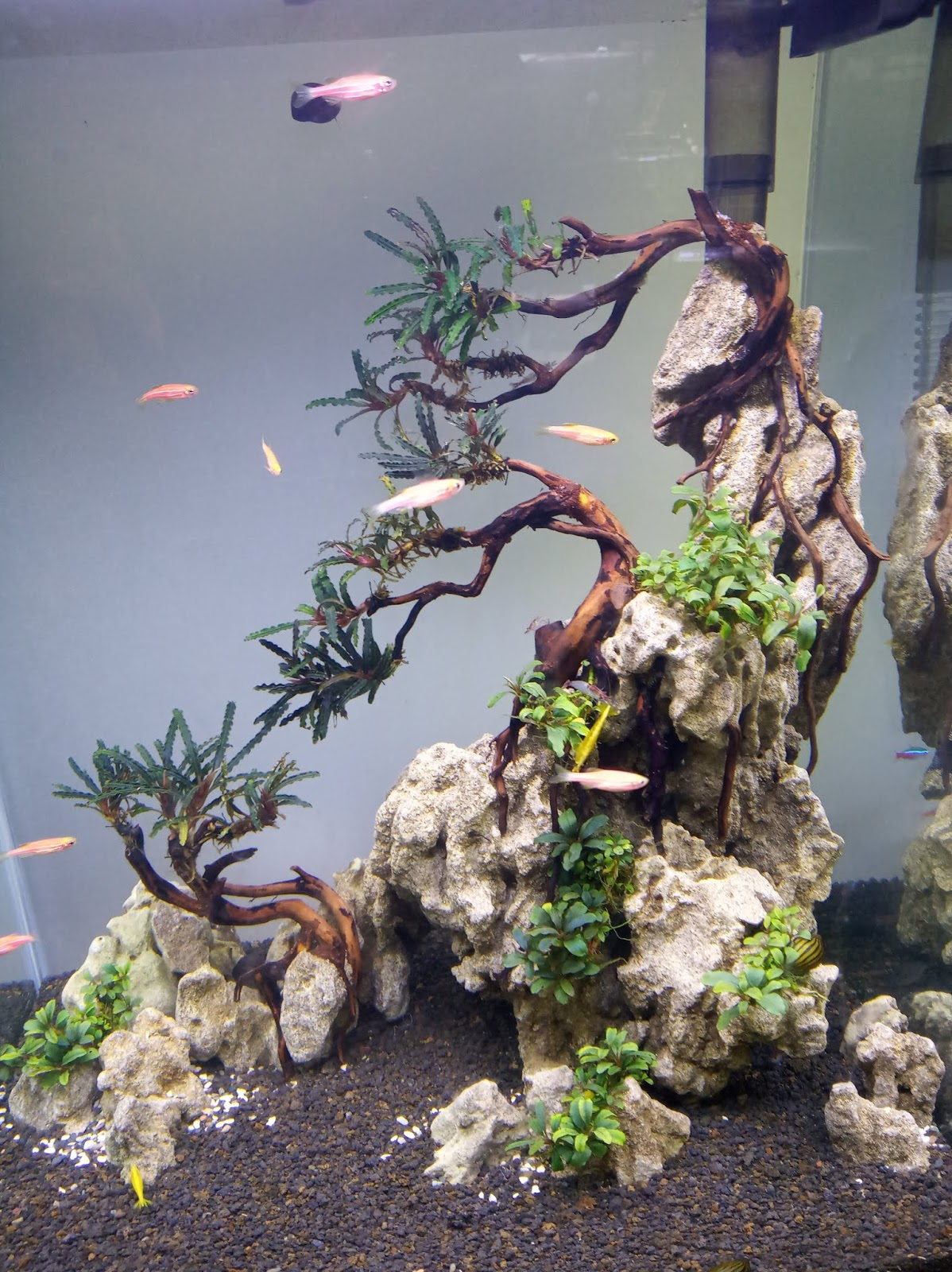 Yang Dimaksud Aquarium Aquascape Ionku Com