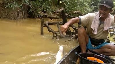 Umpan-Ikan-Baung