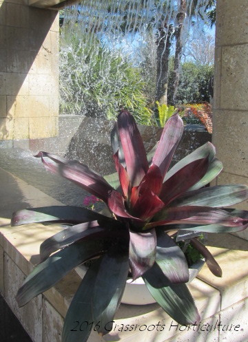 Bromeliaceae Family