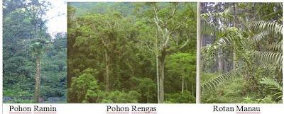 Ekosistem Darat Dan 6 Bioma