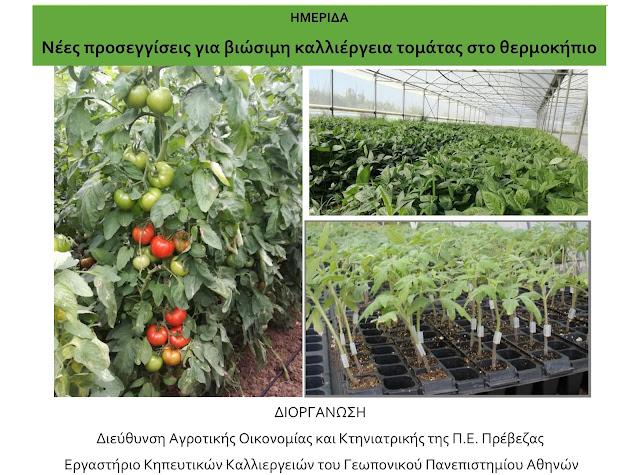 Πρέβεζα: Ημερίδα της ΔΑΟΚ Πρέβεζας και του Γεωπονικού Πανεπιστημίου Αθηνών την Παρασκευή 3 Μαΐου για την καλλιέργεια της τομάτας θερμοκηπίου
