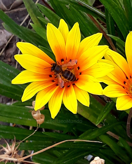 dia mundial das abelhas - a bella e o mundo
