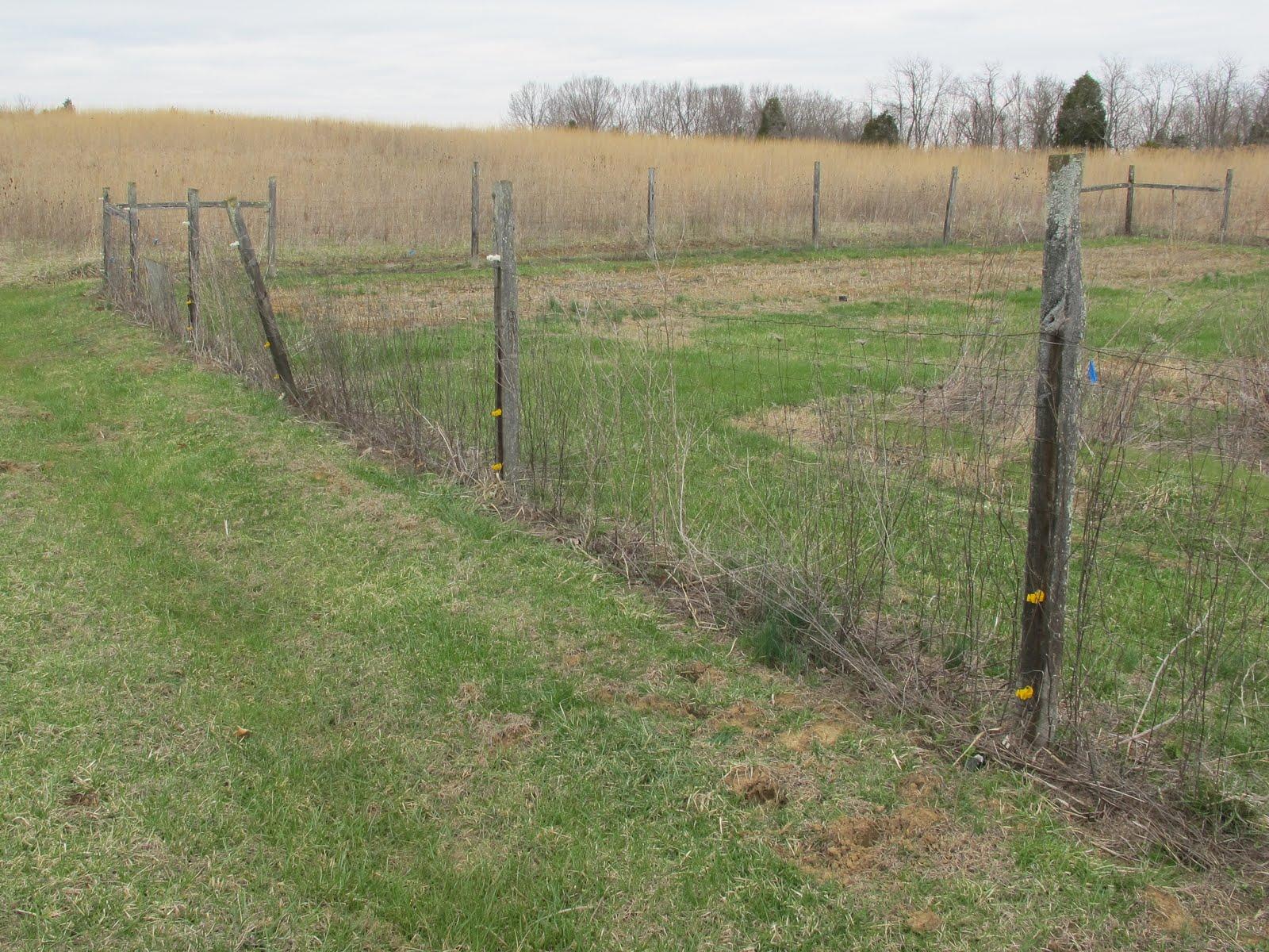 Blue jay barrens a new garden fence a new garden fence baanklon Image collections