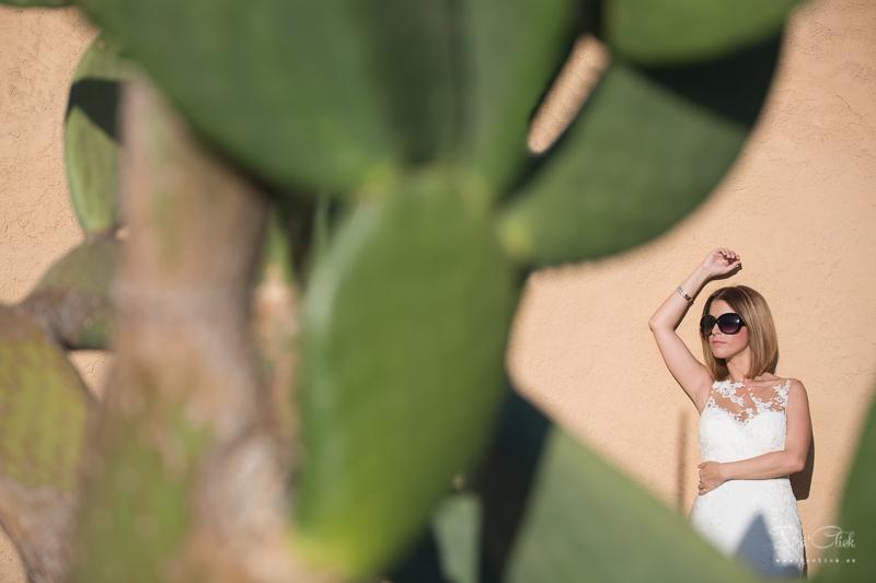 cactus novia
