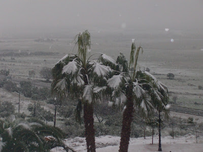 palmeras nevadas