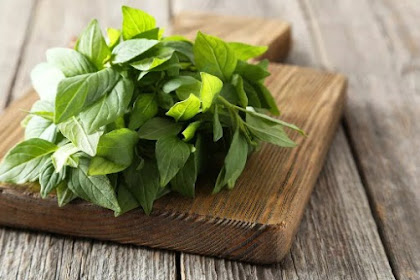 Basil Leaf Has Very Good Benefits For Our Health