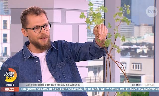 program ogrodniczy halo ziemia w dzień dobry tvn