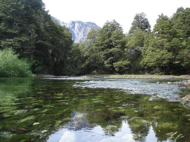 Fauna e flora do Lago Nahuel Huapi em Bariloche