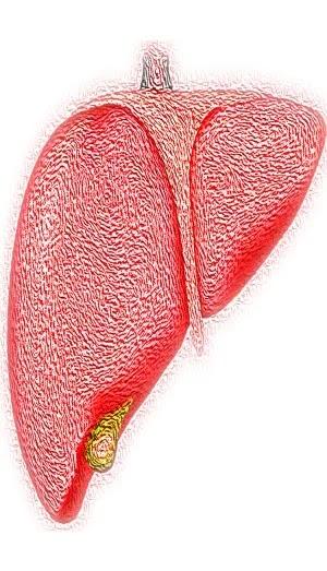 Jaundice diet, bad liver