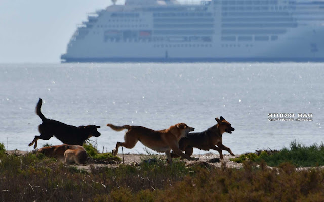 «Καμπανάκι» για νέο κορωνοϊό που προέρχεται από σκύλους