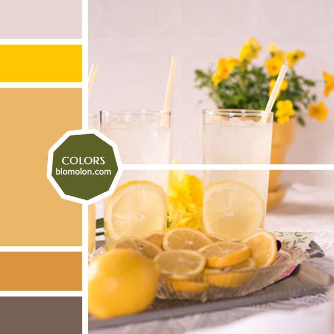 variedad_en_color_moodboard_44