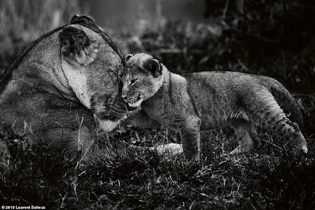 Nhiếp ảnh gia Laurent Bahuex nổi tiếng với những bức ảnh đen trắng