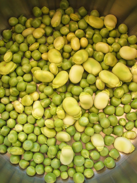 pan full of homegrown peas and beans