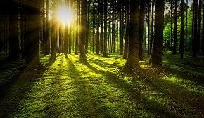 Hutan merupakan salah satu kekayaan alam yang telah tersedia dan telah ada sejak bumi ini terbentuk. Hutan adalah harta kekayaan yang tidak memiliki nilai yang bisa diperhitungkan. Kekayaan hutan tersebut perlu dijaga, dilindungi dan dilestarikan sehingga dapat menjalankan fungsinya dengan baik. Pengertian hutan menurut ahli (terlengkap) memiliki beberapa perbedaan namun dalam satu lingkup mengenai alam dan lingkungannya.