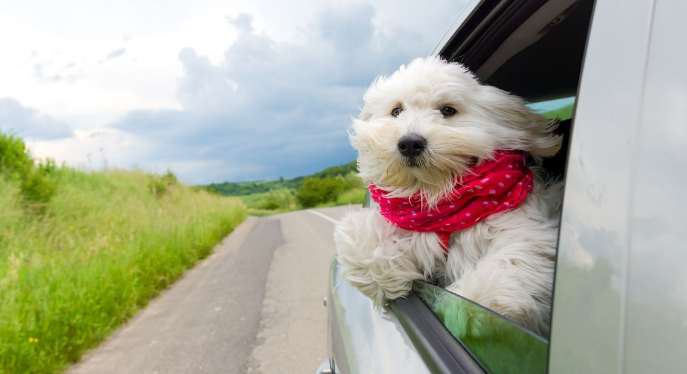 Top Tips for You and Your Pets in Holiday Road Trip - About