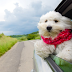 Top Tips for You and Your Pets in Holiday Road Trip