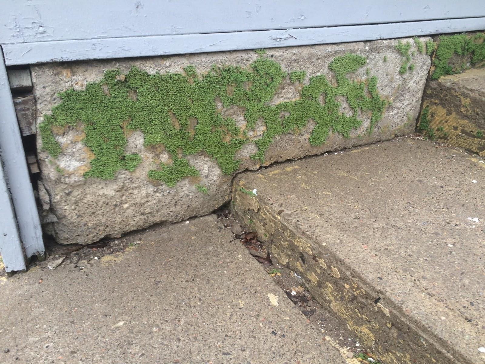Thinking With My Hands Indoor Outdoor Moss