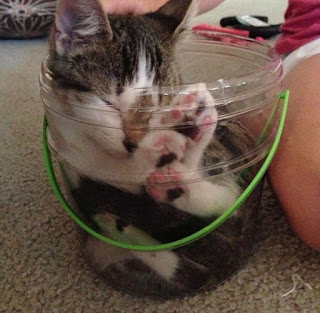Bikin Ngakak, Lihat Kelakuan 10 Foto Kucing Yang Masuk ke Dalam Wadah Ini