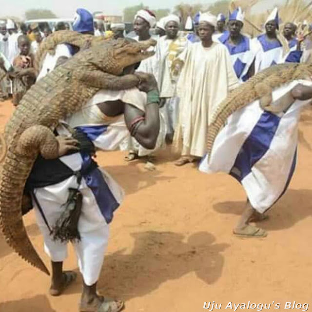 Nigerian Men Carrying Live Crocodiles On Their Backs During A Festival In Sokot