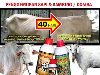 agen-resmi-nasa-di-tawalian-mamasa-085232128980