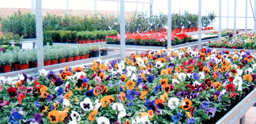 Formaci n profesional b sica de agro jardiner a y for Definicion de vivero