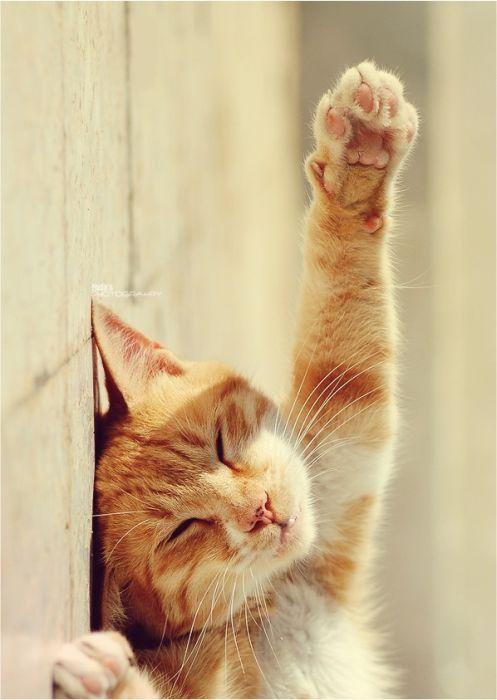 Фото смешных котов (15 фото)