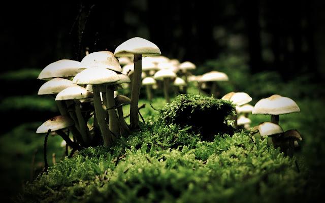 hongos creciendo en la naturaleza