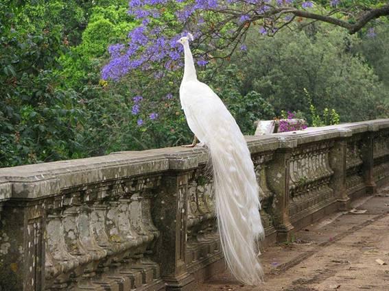 عرائس من غير البشر بثيابها البيضاء image012-771524.jpg