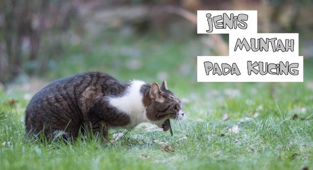 Kucing Muntah Bening