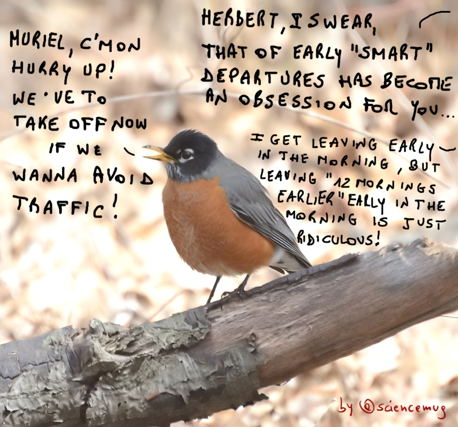 American robins discuss about smart early departures (by @sciencemug)