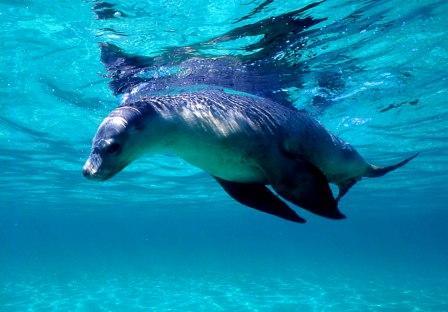 Bagaimana mengedit foto ada binatang paus di langit dengan hape