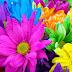 Inilah warna warna yang mampu mempengaruhi pola perilaku manusia