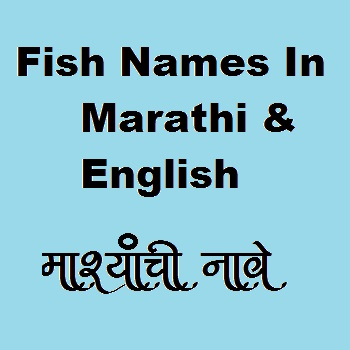 Red Snapper fish name in Marathi