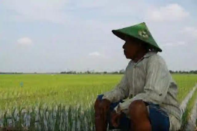Kenaikan kedelai impor yang berimbas pada produksi tahu dan tempe dalam negeri. Sangatlah disayangkan. Pasalnya, Indonesia dikenal sebagai negara yang memiliki kekayaan alam yang berlimpah ruah. Terdiri atas 17.000 pulau dan luas wilayah daratannya sekitar 1,9 juta km². Dengan demikian, Indonesia memiliki potensi lahan yang sangat besar untuk aktifitas pertanian yang terhampar luasnya dari sabang sampai merauke.