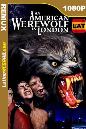 Un hombre lobo americano en Londres (1981) Latino HD BDREMUX 1080P ()