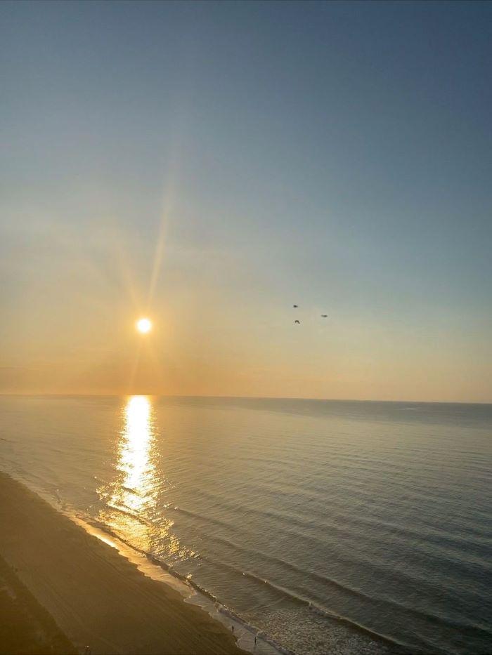 Birds flying into the horizon at the beach