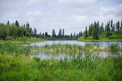 Lakeshore Trail, Elk Island National Park