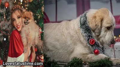 Christmas Dog Captions Quotes for your Pet Dog