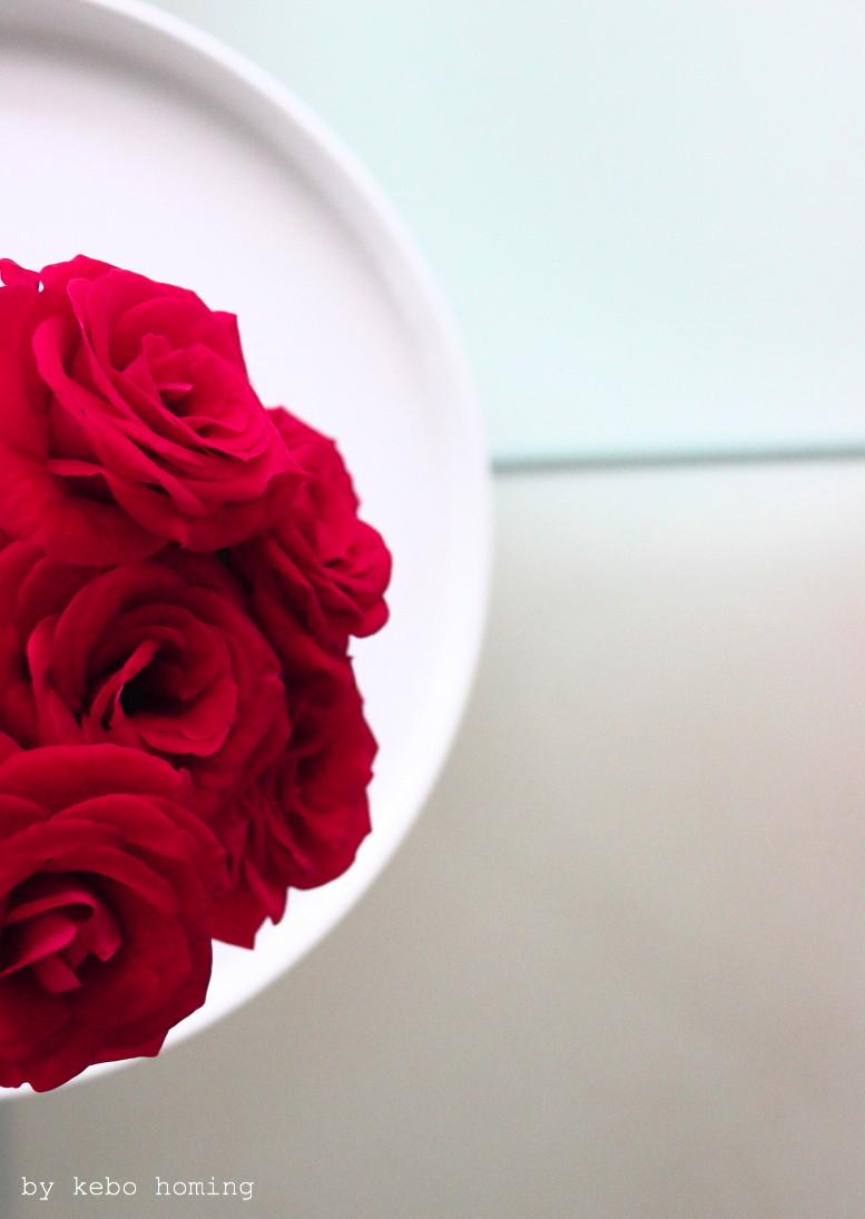 Blumen am Freitag, flowerday, flowers, rote  samtige Rosen auf dem Südtiroler Food- und Lifestyleblog kebo homing