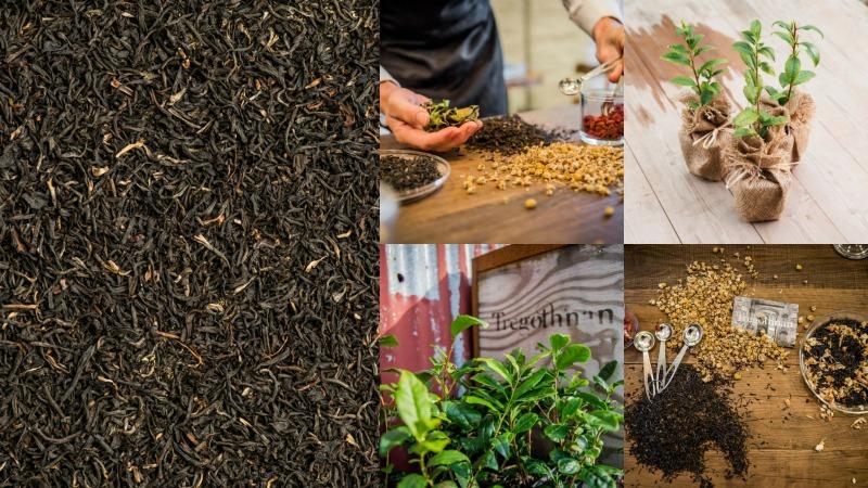 hierbas y planta de te (camellia sinensis)