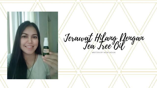Jerawat Hilang Dengan Tea Tree Oil
